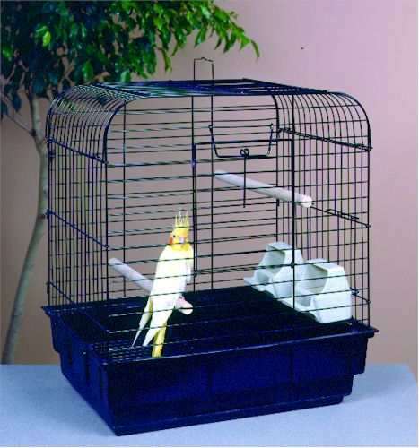 behavior and characteristics of cockatiels Special characteristics  it is necessary to understand a cockatiel behavior to keep them happy and content for life they can be trained to imitate simple words.